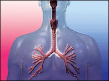 Researchers Examine How the Loss of an Inflammatory Protein Impacts Lung Infections