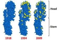 A 'Universal' Flu Vaccine?