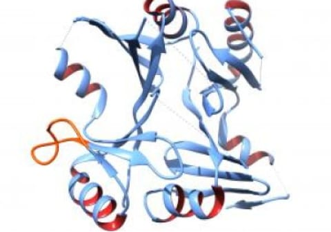 Structure of MRSA Antibiotic-Resistant Protein Identified