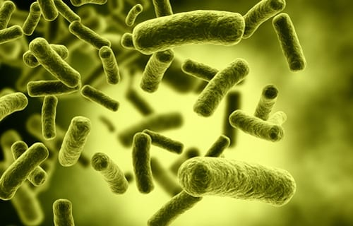 Death Toll in NYC Legionnaires' Outbreak Rises to 12, Two More Buildings Test Positive for Bacteria