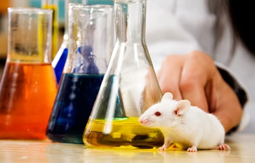 Breakthrough Could Reduce Animal Testing Of Asthma And Allergy Meds