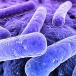 Cytokine IFN-γ Helps Clear Lethal Bacteria In Cystic Fibrosis