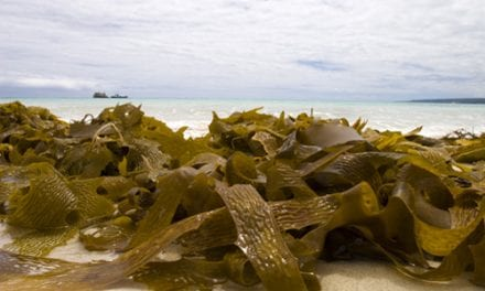 Seaweed-based Drug Could Extend Life Expectancy for Cystic Fibrosis Patients