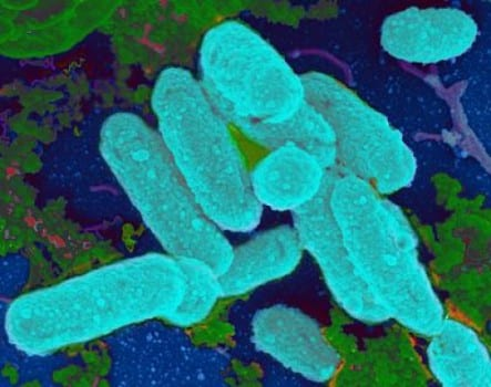 Link Between Antibiotics, Bacterial Biofilms and Chronic Infections Found