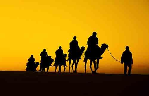 Camels Test Positive for MERS in Kenya