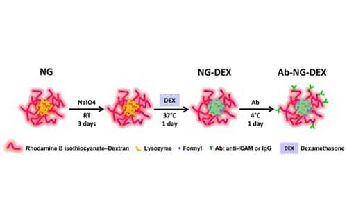 Nanocarriers Deliver Drugs and Prevent Pulmonary Inflammation
