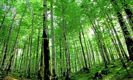 Trees Save Lives, Reduce Respiratory Problems
