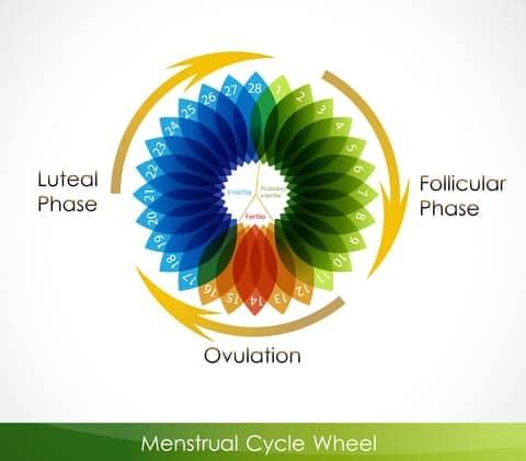 Menstrual Cycle May Effect Nicotine Cravings