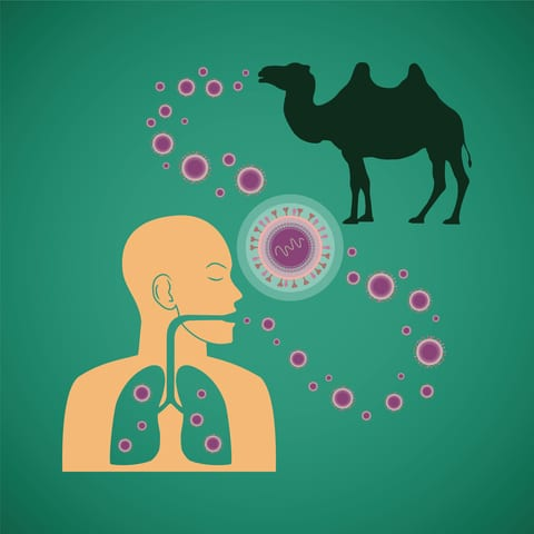 MERS Virus Rarely Transmitted from Camels to Humans