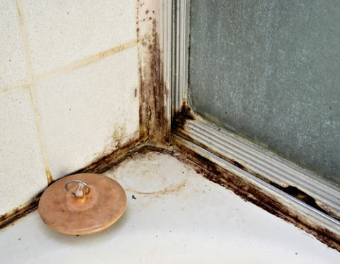 Moldy Homes Increase Child Asthma Risk