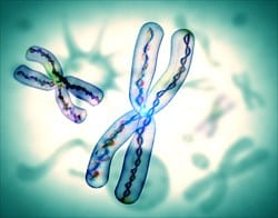 New Research Finds Link Between Telomere Length and Lung Disease