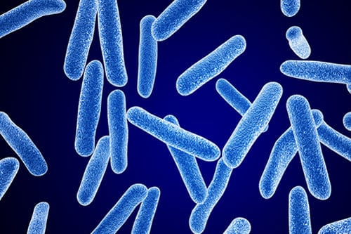 Bacterial Susceptibility May Explain Persistent COPD Inflammation