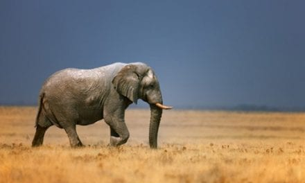 We Are in the Midst of an Elephant Tuberculosis Epidemic