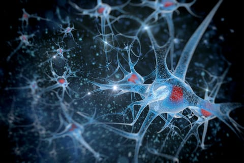 Breath Taking: Sensory Neuron Subtypes Control Different Respiratory Functions
