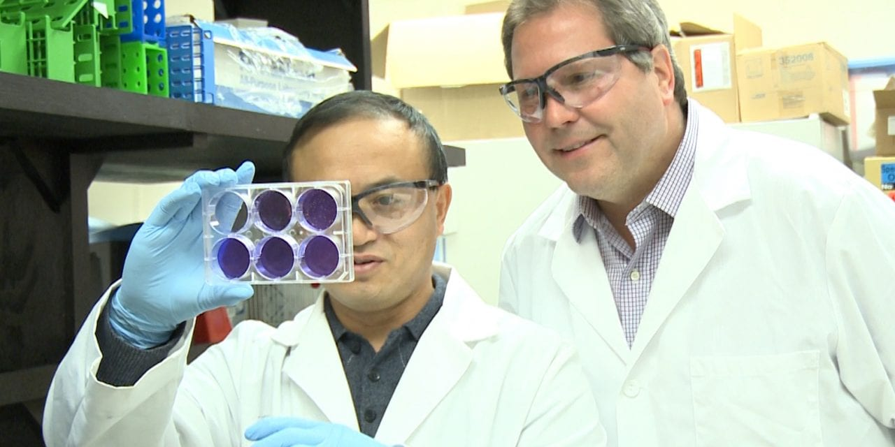 Researchers Develop Vaccines for Two Strains of Avian Influenza