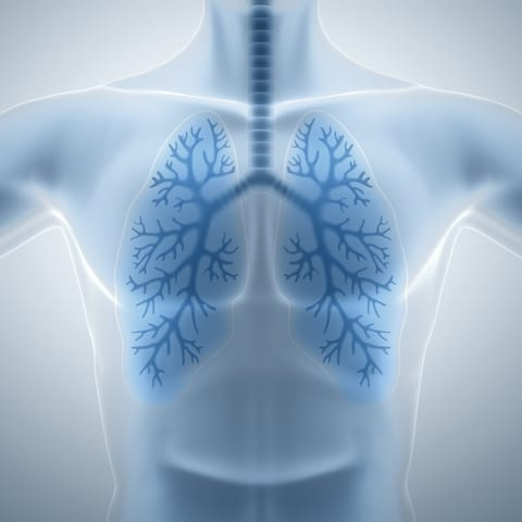 Versatile Lung Cells Able to Regenerate More Effectively than Suspected