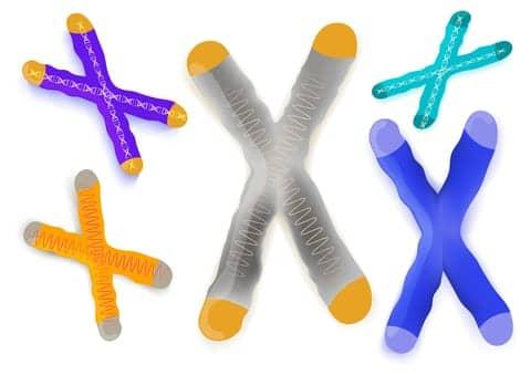 Telomeres Linked to Origin of Pulmonary Fibrosis