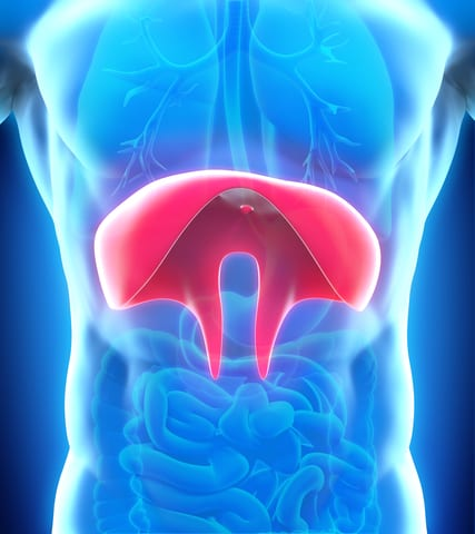 New Insight on How Diabetes Affects Diaphragm