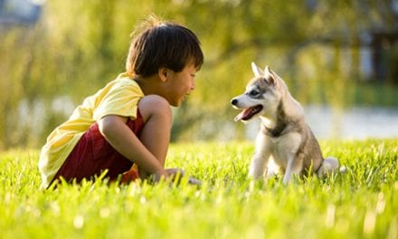 No Link Between 'Hypoallergenic' Dogs and Lower Risk of Childhood Asthma