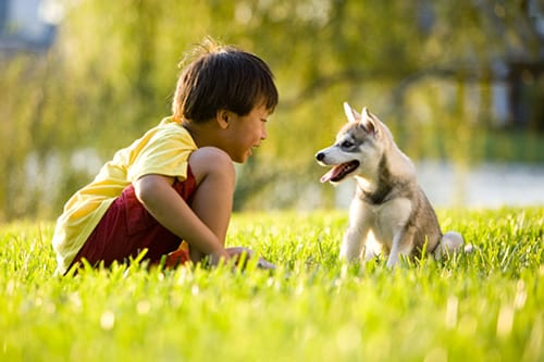 More Evidence Pets Can Reduce Childhood Risk of Allergies