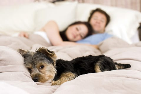 New Sleep Research Finds the Best and Worst Sleepers in Europe