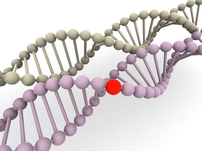 Gene Variants Influence Immunity to Respiratory Infections, Rhinovirus