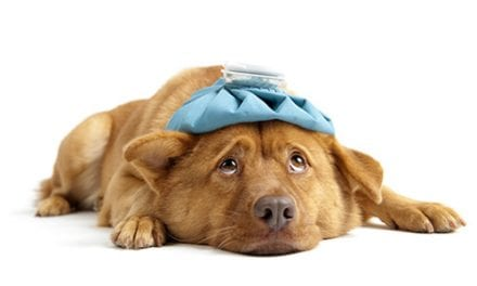 New Canine Flu Vaccines