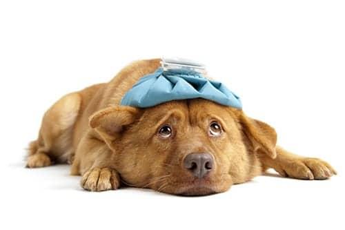 New Canine Flu Vaccines
