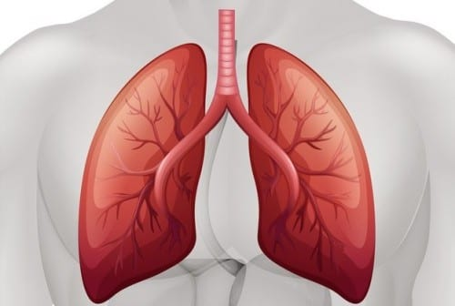 Researchers Explore Possible Treatment Strategy for Lung Cancer