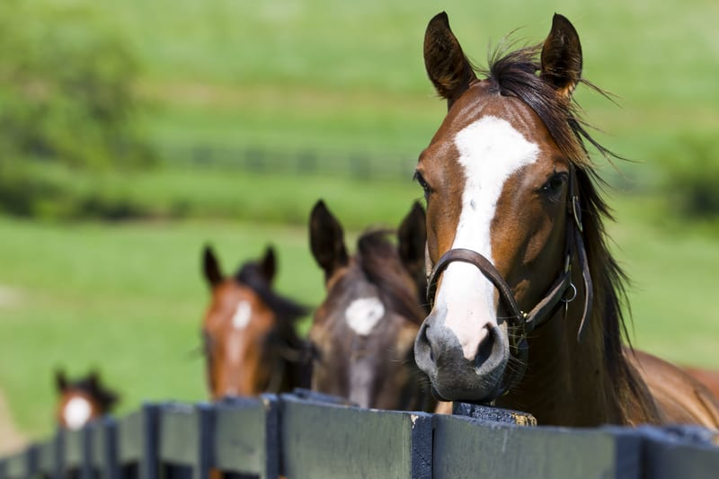 No Evidence Horses Are Carriers of MERS