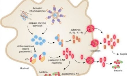 Researchers Explore New Methods for Controlling Sepsis, Bacterial Infections