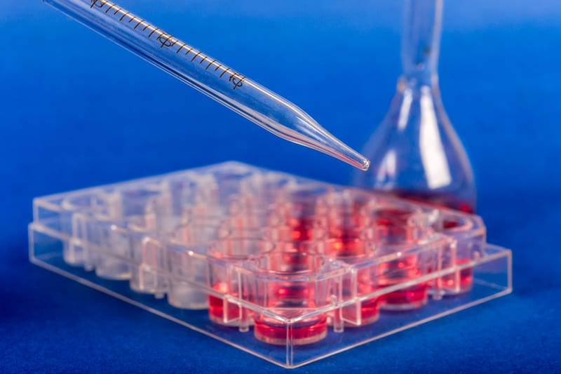 'Organoids' Grown from CF Patients Can Test Therapies