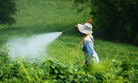 Prenatal Exposure to Pesticides Leads to Worse Lung Function