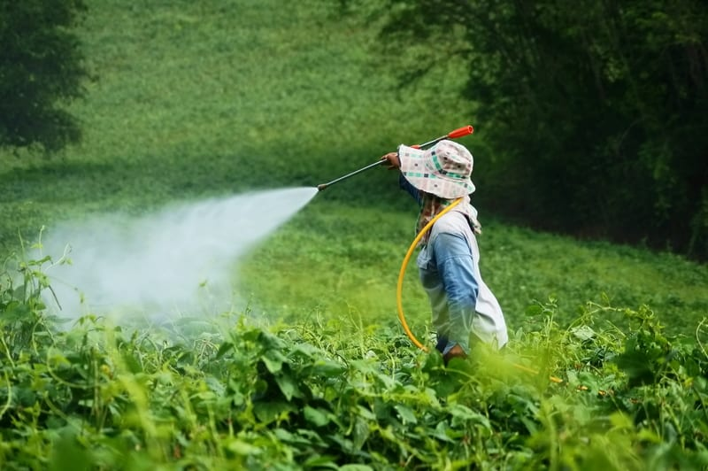 Common Pesticides Linked to Allergic, Non-allergic Wheeze