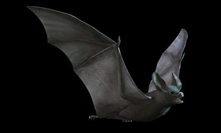 Bat Flu Could Cross Over to Humans