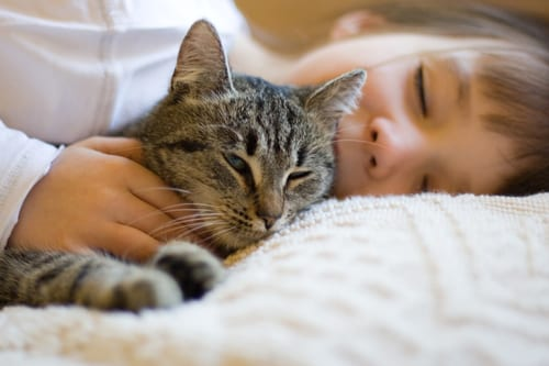 Kids Exposed to Cat, Pest Allergens Had Lower Asthma Risk