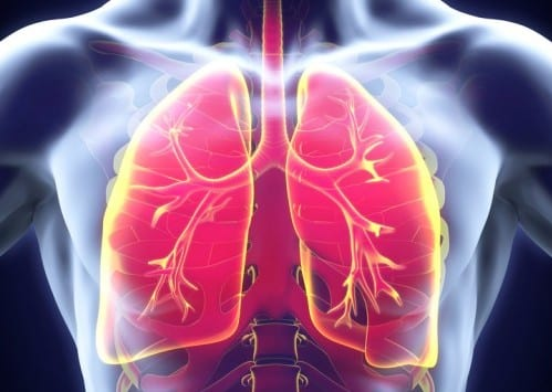 Blocking Innate Immunity Protein May Treat Select Pulmonary Fibrosis Patients