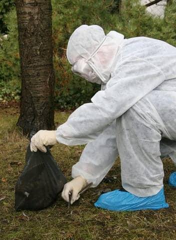 South Korea Raises Bird Flu Alert to Maximum