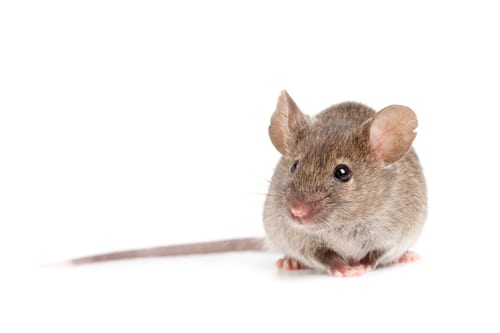 Aloperine May Protect Against Pulmonary Fibrosis in Mouse Model