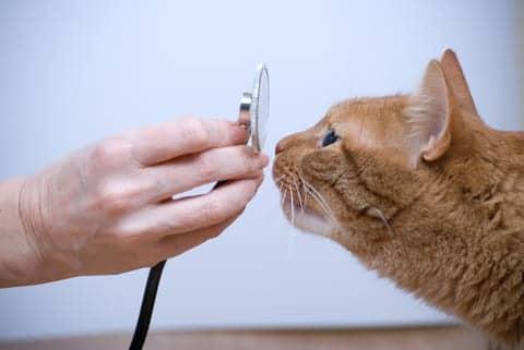 Swiss Scientists Develop Vaccine for Cat Allergies