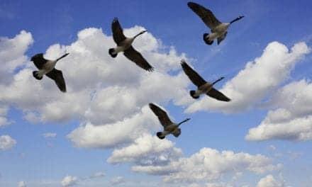 Asian Bird Flu Can Enter North America through Alaska