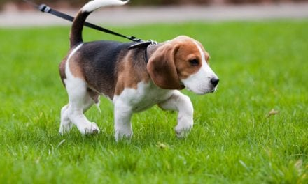 Dogs, Grandkids Can Keep COPD Sufferers Active