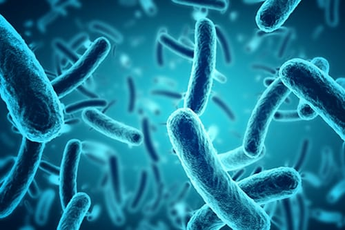 Cystic Fibrosis Lung Bacteria Increases in First Years of Life