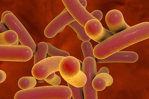 Vapers and Non-smokers Have the Same Flourishing Microbiome