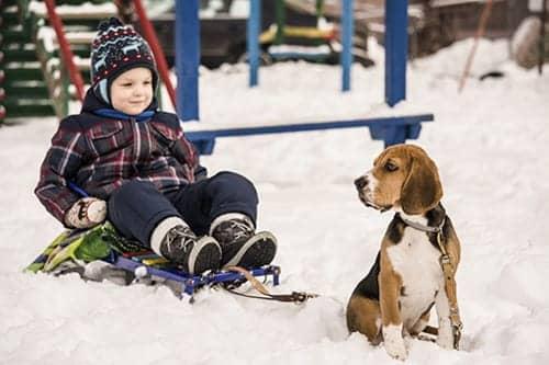 Dogs Reduce Risk of Childhood Eczema, Asthma Symptoms
