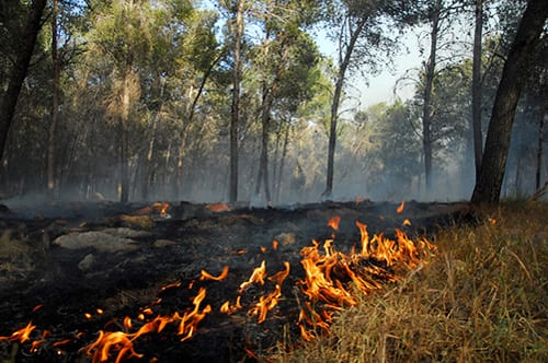 Wildfire Smoke Exposure Linked to Increased Risk of Contracting COVID-19