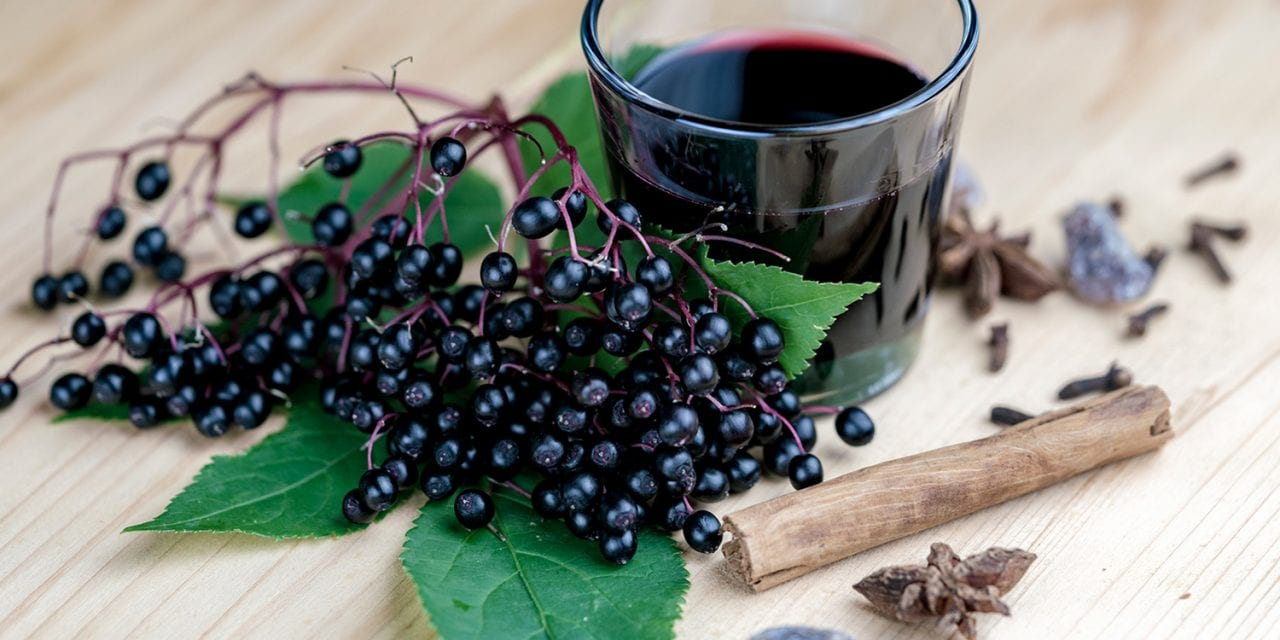 Black Elderberry May Reduce Upper Respiratory Symptoms