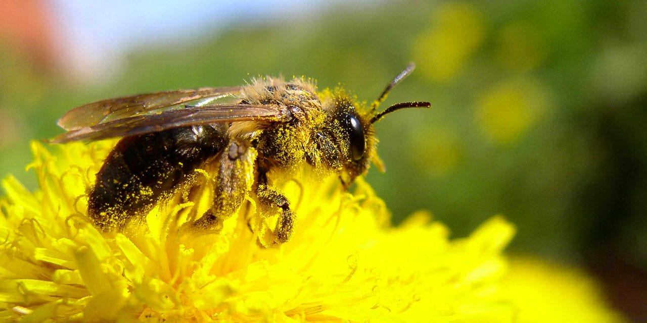 How Allergens in Pollen Help Plants Do More Than Make You Sneeze