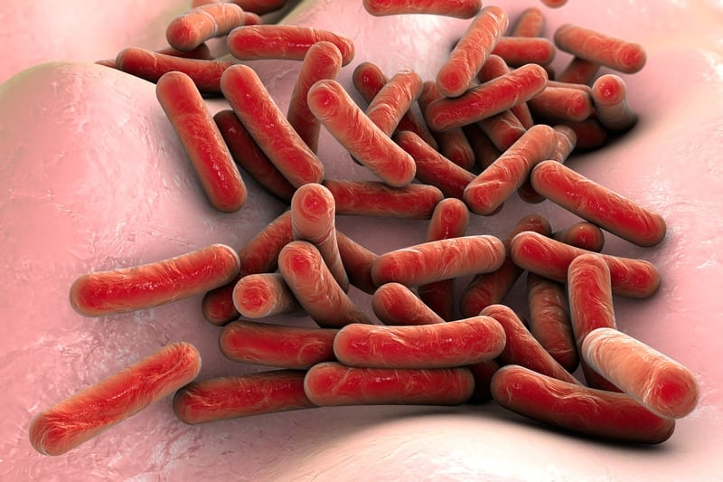A Brief History of How Tuberculosis Changed the Human Immune System