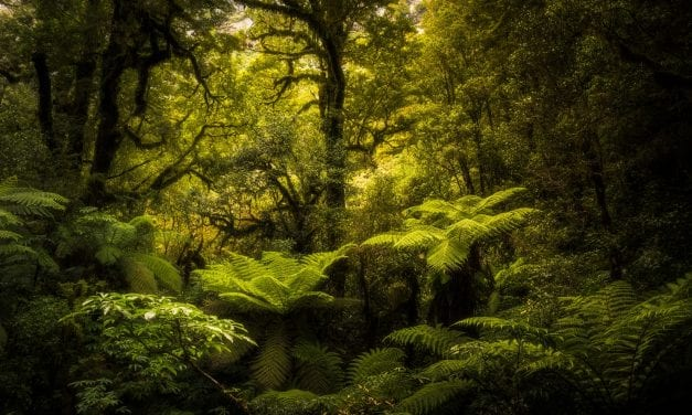 Deforestation Leads to Increase in Infectious Diseases